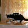 Отучить кота лазить на стол