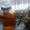 Чайный гриб полезные свойства