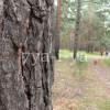 Что делать если заблудился в лесу