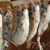 вяление рыбы технология