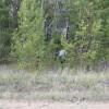 Грибы смешанного леса