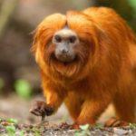 Год какой обезьяны 2016