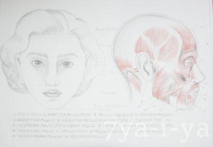 Рисование портрета карандашом