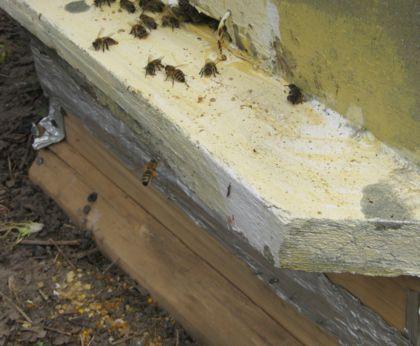 пчелы вылезают