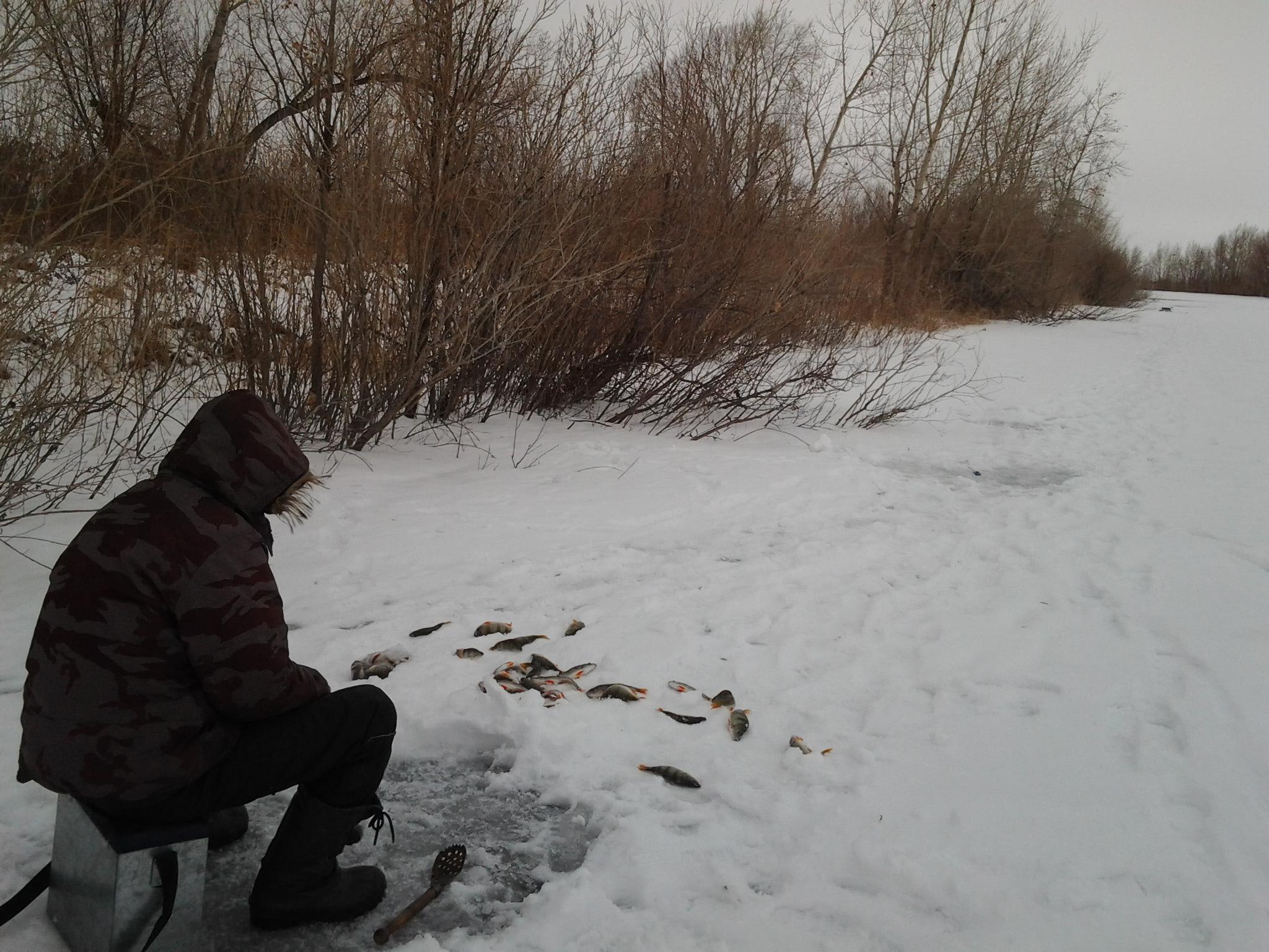 где искать судака зимой на незнакомом водоеме
