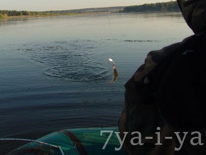 ylovisylov