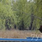 Ловля на летний боковой кивок