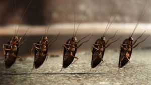 тараканы пляшут