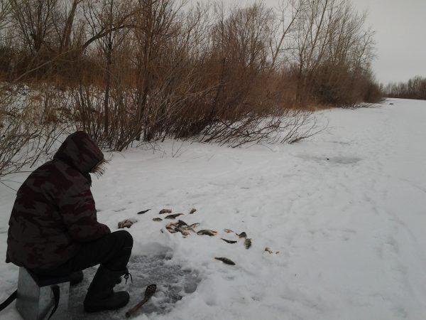 как найти окуня зимой