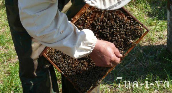 Лечение пчелами остеохондроза