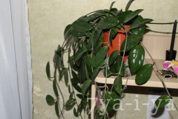 Полезные свойства комнатных растений