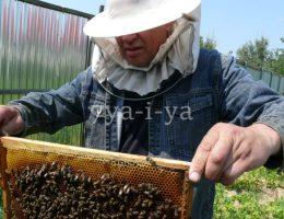 Укус пчелы лечение
